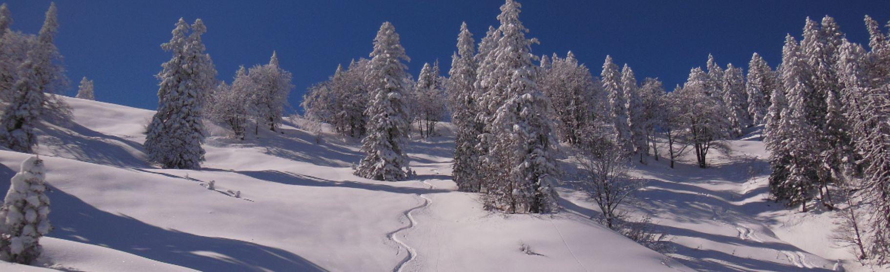 waldpiste-winter.jpg